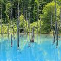 Photos: IMG_2094a青い池