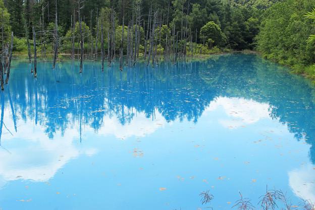 IMG_2101a青い池