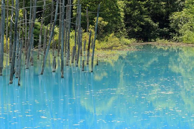 IMG_2106a青い池