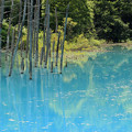 Photos: IMG_2106a青い池
