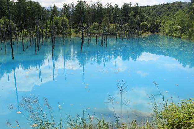 IMG_2114a青い池