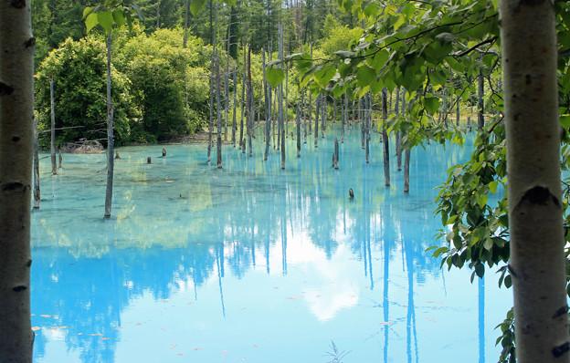 IMG_2130a青い池