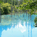 Photos: IMG_2130a青い池