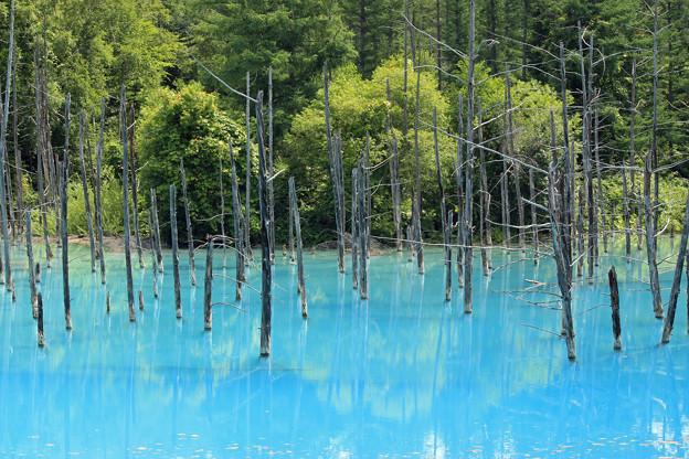 IMG_2092a青い池