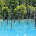 Photos: IMG_2092a青い池