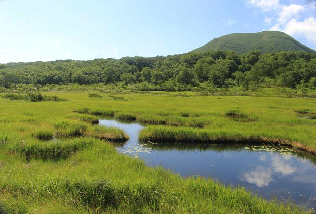 Photos: IMG_1566a夏の湿原
