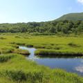 IMG_1566a夏の湿原