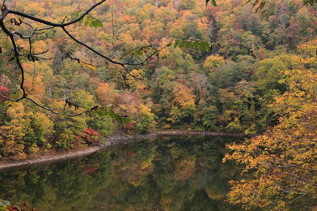 半月湖の秋IMG_4135a