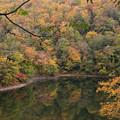Photos: 半月湖の秋IMG_4135a