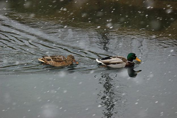 Photos: 雪路を急ぐIMG_4756a