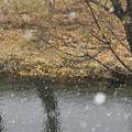冬の到来IMG_4758a