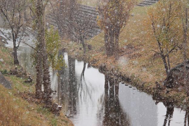 冬の到来IMG_4767a