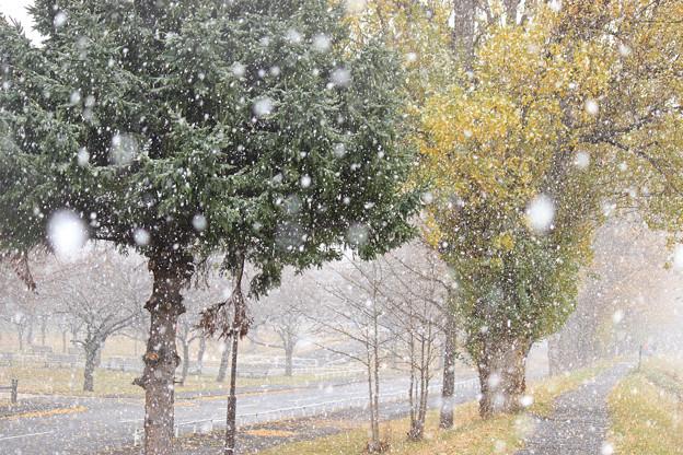 冬の到来IMG_4768c