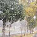 Photos: 冬の到来IMG_4768c