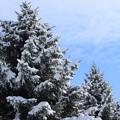冬空IMG_4975a