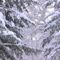 雪深いIMG_5056a