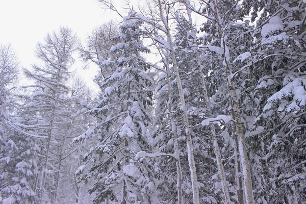 雪深いIMG_5055a