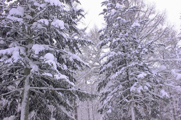 雪深いIMG_5057a