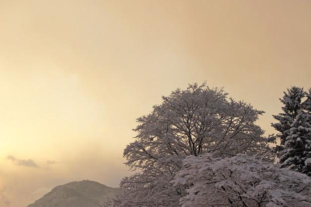 早朝の円山IMG_5278a