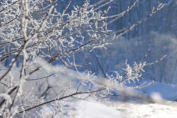 霧氷MG_5583b