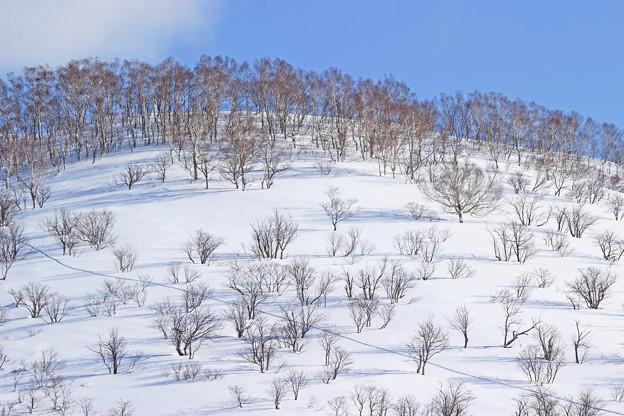 スキートレースの一本道