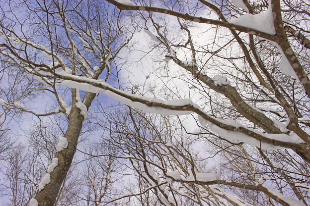 冬の森IMG_5836a
