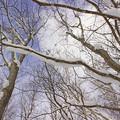Photos: 冬の森IMG_5836a