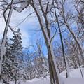 Photos: 冬の森IMG_5880a
