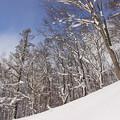 Photos: 冬の森IMG_5867a