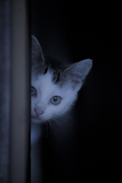子猫は見た!