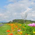 Photos: 2018.09.18 きょうの風景(雲とコスモス)
