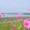 Photos: 2018.10.15 きょうの風景(コスモスと雲)