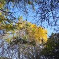 2018.11.16 きょうの風景・黄葉と青空