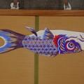 紫鯉共通(写真は1