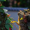 Photos: 小さな秋見つけた