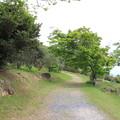 Photos: オリーブ園を散策