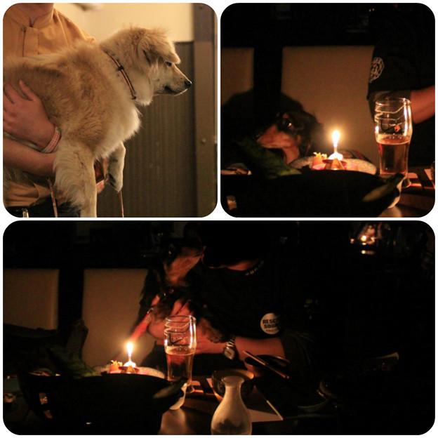 お宿わんこ紹介_Birthdayのサプライズ