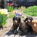 写真: お花とミント大地プチメレ