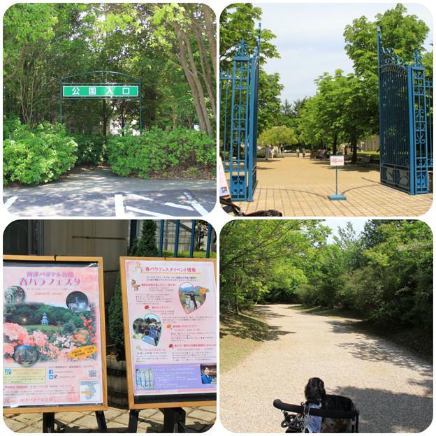 河津バガデル公園へ(2018年5月6日)