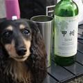写真: ワイン飲むよ
