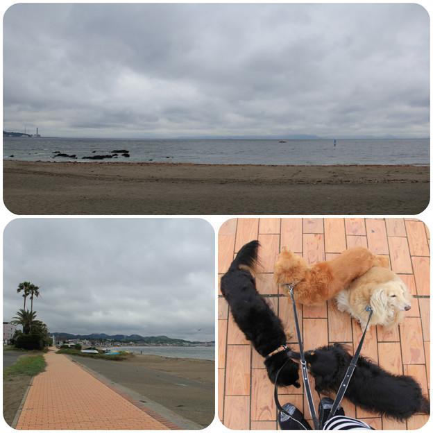 海岸を朝ん歩