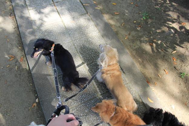 釈迦堂PAでお散歩休憩