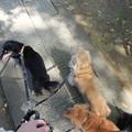 写真: 釈迦堂PAでお散歩休憩