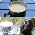 写真: コーヒーを飲みながら朝食の準備