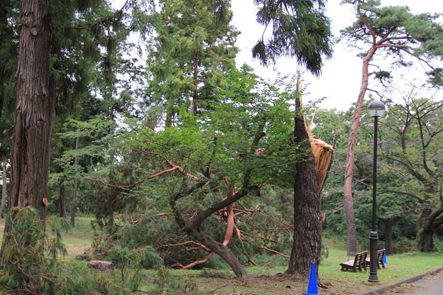 木が折れてた