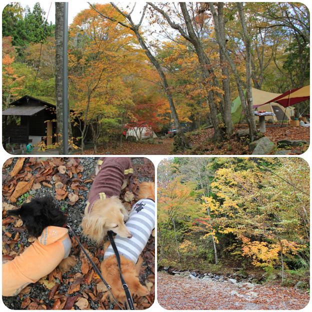 紅葉散歩(山伏オートキャンプ場2018年10月28日)