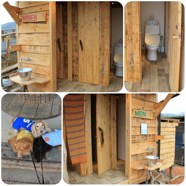 新サイトのトイレ