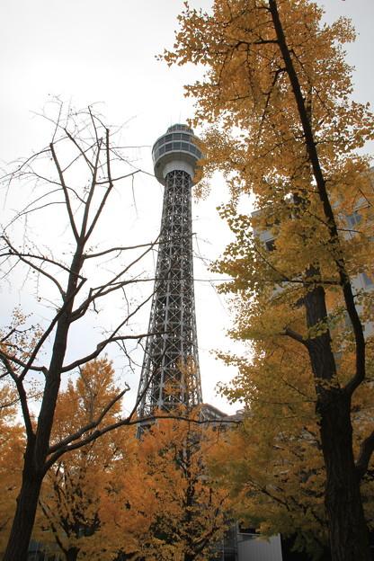 マリンタワーと黄葉(2018年12月2日)