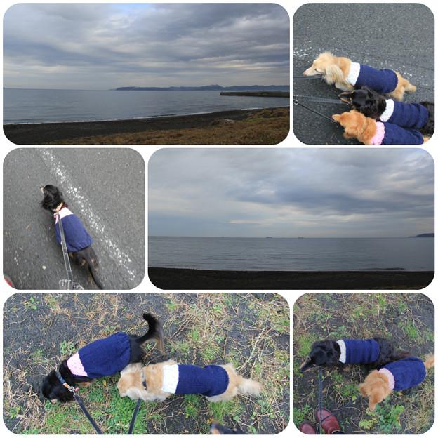 海までお散歩
