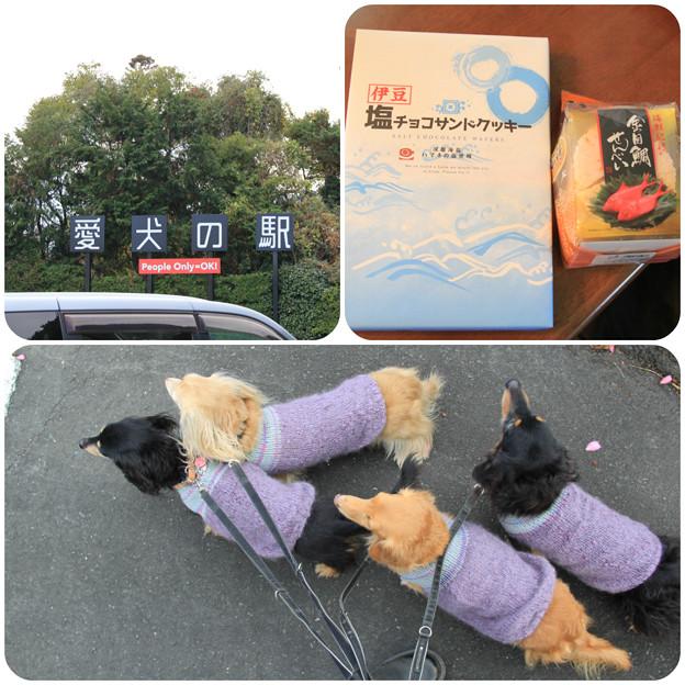 愛犬の駅でお買い物